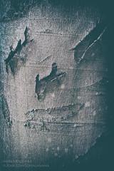 Tree Face 35 (Myrkwood666) Tags: myrkwood666 tree baum boom treeface wood forest wald bos dark