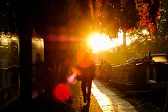 Autumn has arrived in London (sara.wendelmelhuish) Tags: canalboat longboat narrowboat urban streetphotography yellow red tree islington angel london canal fall leaf orange sunrise lensflare flare autumn