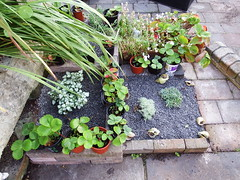 Strawberries and Succulents (vw4y) Tags: planter garden strawberryplants succulents home