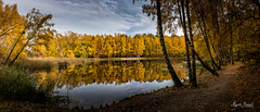 Autumnal forest (Magda Banach) Tags: canon canoneos5dmarkiv europe tamronsp2470mmf28divcusdg2 autumn colors flora forest marcelin marcelinforest plants poznań reflection sky tree treeline trees view water wood yellow greaterpolandvoivodeship poland pl