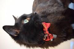 Just wonderful (MabelandMu) Tags: wwwmabelandmucouk catsdogs dogbowtie catbowtie