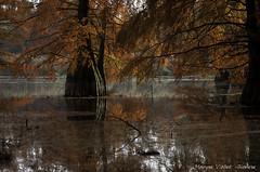 La mare aux fées (Grozibou38) Tags: arbres trees automne automn nature natur couleurs isère rhônealpes mare fees cyprès conifère paysage landscape nikond90 reflets