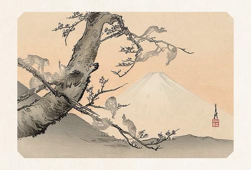 41-Carte postale // 10x15cm // Singes Fuji