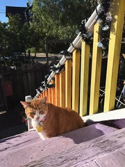 Halloween decorations (artnoose) Tags: autumn fall decorations halloween steps sun porch tabby orangekitty cat kitty orange