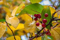 Green Bay Fall Colors-16