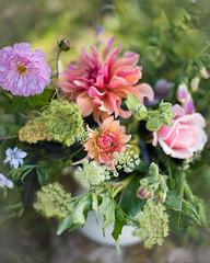Late Summer Abundance Course close up (photoart33) Tags: summer flowers dahlia rose cosmos dof homegrown