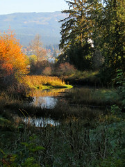 Autumn Creek (Shelley Penner) Tags: vancouverisland autumn estuary schumakerbay water mountains trees bright sunlight landscape creek