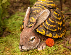 Rabbit in a Half Shell (giantmike) Tags: epicsystemscorporation grimm ground turtle art bunny rabbit