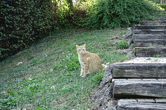 Cat @ Parc du Lachat @ Annecy-le-Vieux (*_*) Tags: annecylevieux annecy hautesavoie france 74 europe savoie september 2018 summer été lachat park cat kitten chat