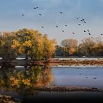 Rheininseln im Herbst thumbnail