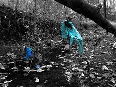 IMG_3255 (Miller.3193) Tags: litter stream fall leaves edited lightblue selectivecolor blue environment forest trash