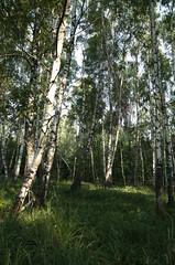 A05_8026 (sasha817) Tags: ukraine carpathians