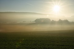 "Bodennebel mit Sonnenaufgang / Ground fog with sunrise (reipa59) Tags: sonnenaufgang forest sonne countryside germany herbstfärbung nature herbst rhinelandpalatinate licht bäume nordpfalz herbststimmung north palatinate sunbeams herbstbeginn early morning rheinlandpfalz natur sunrays baum sunrise sun waldrand frühmorgens morgensonne pfalz light countryroads ransweiler birkenhof sonnenstrahlen bodennebel fog misty dusty nebel groundfog sky feld gras himmel field grass wiese meadow autumn mood ""thisphotorocks"""