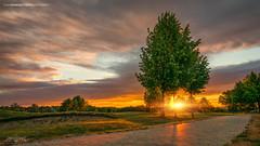 Askim, Norway 0357 - Trees by the Road at Golden Sunset (IVAN MAESSTRO) Tags: sony nex askim norway sunset sunrise tree hdr ivan maesstro landscape