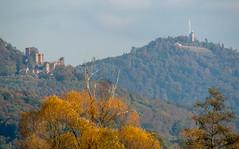 Burg Hohenbaden und der Merkur (KaAuenwasser83) Tags: burghohenbaden burg berg merkur turm wald wiese bäume herbst