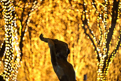 Stretch lightly (Elios.k) Tags: horizontal outdoors nopeople statue silhouette bronze art publicart emiliogreco memoriesofsummer sculpture night woman lights bokeh dof depthoffield focusinforeground backgroundblur illumination sendaipageant pageantofstarlight winterillumination festival keyaki zelkova tree street jozenji jozenjidori led dark nightlights colour color travel travelling vacation canon 5dmkii camera photography december 2017 sendai miyagiprefecture tōhokuregion tohoku honsu asia japan christmas christmaslights