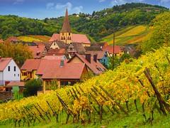 Niedermorschwihr (Haut-Rhin, F) (pietro68bleu) Tags: alsace vignoble couleursautomnales maisonsàcolombages église clochertors