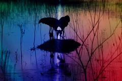 Where Love Is (Kenziu Garcia) Tags: sandhill crane family bedtime photoshop elements 8 deltona lakes florida rainbow colors reflections silhouettes heart