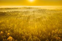 Fog | Čepkeliai marsh | Dzūkija National Park #290/365 (A. Aleksandravičius) Tags: fog čepkalių raistas čepkeliai marsh dzūkija national park europe sunrise morning misty sun trees forest l1d20c hasselblad aerial lietuva lithuania dronas 2018 djieurope drone aerialphotography dji mavic pro djiglobal 2 mavic2 mavic2pro djimavic2pro mavicpro2 birdseye 365days 3652018 365 project365 290365