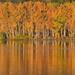 Fall Colors and a Jumping Fish