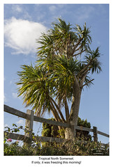 The Tropics (Trevor Watts Photography) Tags: northsomerset gb uk england southwestengland thesouthwest clevedon bristolchannel coast seaside nikon d7200 dx crop sigma 1750f28 © trevorwatts october autumn