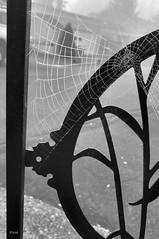 Autumn Web (creepingvinesimages) Tags: hmm monochrome blackandwhite bw spider web gate outdoors kingcity oregon samsung galaxy s9 pse14 topaz