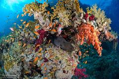 DSC_4760 (bajo_el_mar) Tags: 2018 marrojo underwater fotosub