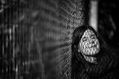 (Black&Light Streetphotographie) Tags: mono monochrome menschen menschenbilder leute people personen portrait urban tiefenschärfe wow dof depthoffield fullframe face friends gesicht nahaufnahme city closeup sony streetshots streets streetshooting streetportrait street schwarzweis streetphotographie sw sonya7rii vollformat blackandwhite bw blackwhite bokeh bokehlicious blur blurring