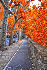 Autumn in Paris (stephaneblaisphoto) Tags: autumn collection beauty nature branch change day diminishing perspective direction fall footpath growth long no people orange color outdoors plant road way forward transportation tree trunk treelined paris france la seine