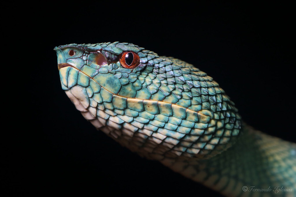 The World's most recently posted photos of reptiles and