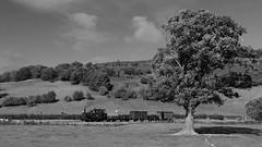 Crossing the fields (Duck 1966) Tags: tree wllr timelineevents steam locomotive train goods wales railway narrowgauge