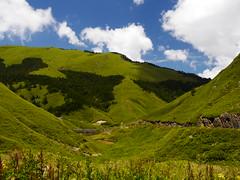一望無際 (*泛攝影*) Tags: green 戶外 景深 panasonic gx7 color 探索 dof 台灣 taiwan 植物 性質 nature inexplore 高山 合歡山