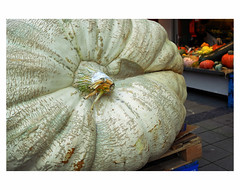IT'S PUMPKIN TIME (bruXella & bruXellus) Tags: pumpkin potiron kürbis ostende oostende ostend belgique belgien belgië belgium leicax1
