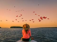 delta-parnaiba-ibis-rouges-2 (terraexperiences) Tags: terranossa brazil brésil nordeste northeastern nossa vip luxe luxury luxurt