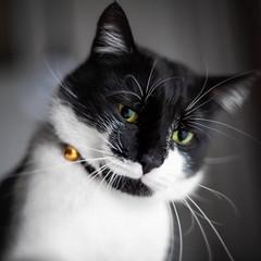 Super Takumar 50/1.4  on Canon 5D (Sebastian Pier Filip) Tags: canon 5d takumar supertakumar50f14 supertakumar5014 f14 cat animal catface