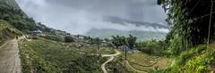 IMG_6188 (BisonAlex) Tags: 越南 vietnam sapa 沙壩 健行 trekking mountain rain could kid peoplelife dog market wood