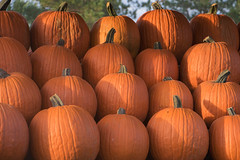 (Theresa Best) Tags: autumn fall halloween orange pumpkin pumpkins canon canon760d canont6s canon8000d theresabest
