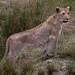 Safari Flickr (132 of 266)