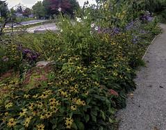 Butterfly Garden (Tony Tomlin) Tags: whiterockbc britishcolumbia canada southsurrey centennialpark flowers butterflygarden