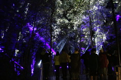2018 - 4.10.18 Enchanted Forest (142) (marie137) Tags: forest lights trees show marie137 bright colourful pitlochry treeman attraction visit entertainment music outdoors sculptures wicker food drink family people water animation