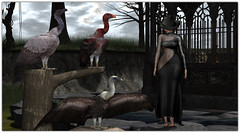 .The Vulture Society (Abi Latzo) Tags: |t|l|c| |t|l|c |t|lc| t|l|c tlc eve events event salemevent fashion lode truth foxcity decor outdoors outdoor outside avatar dress gown homeandgarden home halloween bento beauty secondlife sl shopping