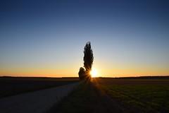 colours of autumn (JoannaRB2009) Tags: colours sun sunset landscape view nature poplar tree trees alley avenue path road fields łódzkie lodzkie polska poland autumn fall