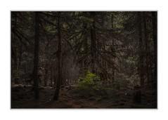Wild kingdom (Krasne oci) Tags: forest trees nature pacificnorthwest moss wildlife painterly texturedphoto evabartos fineart artphotography
