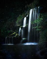 Sylvan Summer Evening - Textured (byron bauer) Tags: byronbauer moonlight waterfall fireflies painterly texture longexposure pond stream moss plants water shadows cascade lights specks