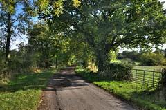 Shropshire country lane near Hemford (Baz Richardson (now away until 26 Oct)) Tags: shropshire hemford countrylanes trees fields farmland countryside