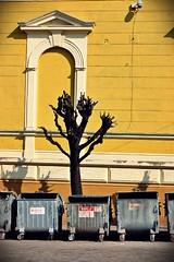 20110416 Yellow and grey ([Ananabanana]) Tags: nikon d40 gimp photoscape 1855mm 1855 nikkor nikon1855mmkitlens nikkorafsdx1855mm nikonafsdx1855mm nikkor1855mm nikon1855mm nikonistas nikonista chernitsvi чернівці́ cernăuți czernowitz czerniowce csernovic черновцы́ чернови́цы ukraine ukrainian building road street architecture streetphotography streetphoto lines bins refuse limetree pollard pollarding pollarded pruned yellow