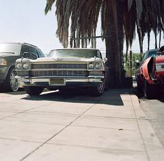 Redwood City (bior) Tags: hasselblad500cm carlzeiss portra160nc kodakportra expiredfilm mediumformat 120 6x6cm suburbs redwoodcity street sidewalk car classic cadillac square