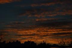 Sunrise 10 21 2018 #02 (Az Skies Photography) Tags: sun rise sunrise morning dawn daybreak sky skyline skyscape clouds cloud rio rico arizona az riorico rioricoaz arizonasky arizonaskyline arizonaskyscape arizonasunrise red orange yellow gold golden salmon black canon eos 80d canoneos80d eos80d canon80d october 20 2018 october202018 102018 10202018