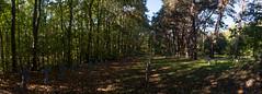 20181016-DSC_4119-Pano (nikontino) Tags: noordwijk sankta begraafplaats