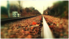Tram lines (psychosteve-2) Tags: tramlines croydon south london